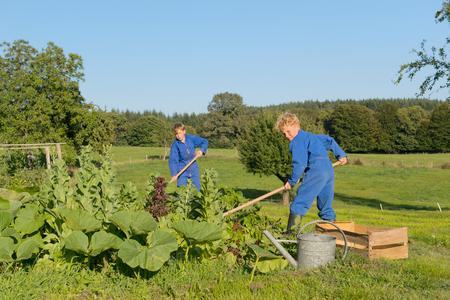 farm boys: Farm boys working in the vegetable garden Stock Photo