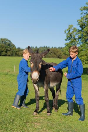 burro: Muchacho de granja currying el burro