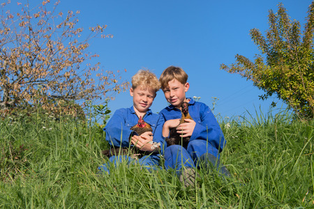 coverall: Farm boys sitting in grass with chickens