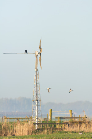 Windmill and birds in Dutch Eempolder Stock Photo