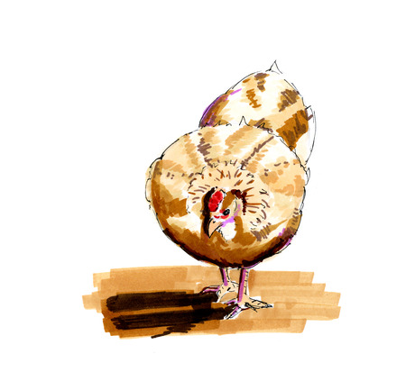 free range: Hand drawn illustration brown chicken isolated over white background