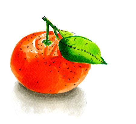 mandarins: painted illustration of a tangerine isolated over white background