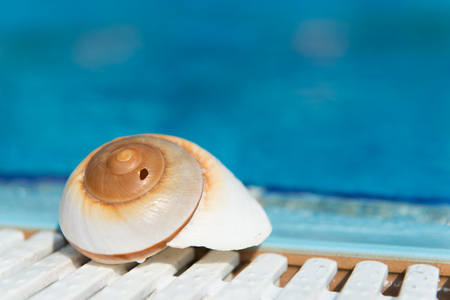 accomodation: Shell at outdoor swimming pool