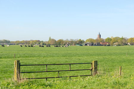 dutch typical: Typical Dutch landscape in the Eempolder with village Eemnes at horizon