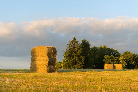 Golden hay packs drying in the agriculture landscape in French Limousin