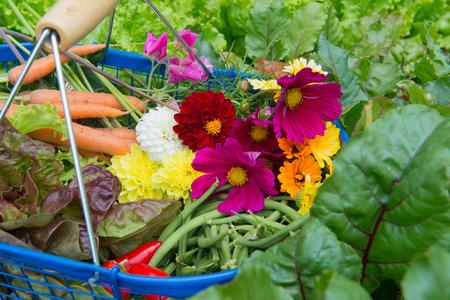 vegetal: Blue harvest basket full with vegetals and flowers from the vegetal garden