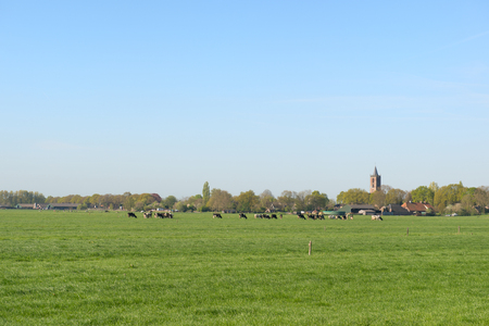 Typical Dutch landscape in the Eempolder with village Eemnes at horizon