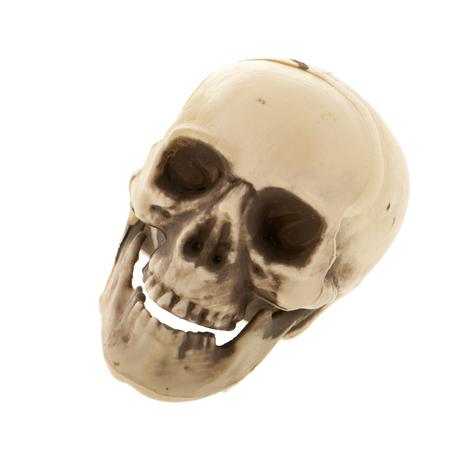 Menschlicher Schädel aus Kunststoff isoliert über weißem Hintergrund Standard-Bild - 69539639