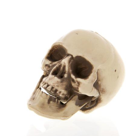 Menschlicher Schädel aus Kunststoff isoliert über weißem Hintergrund
