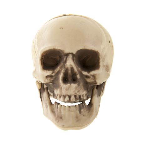Menschlicher Schädel aus Kunststoff isoliert über weißem Hintergrund Standard-Bild - 69539634