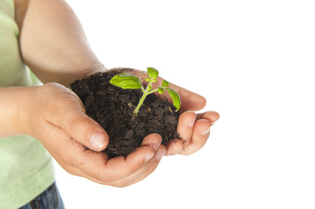 plant seed: Child hands with growing plant from seed