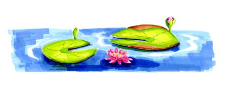 waterlilies floating on water