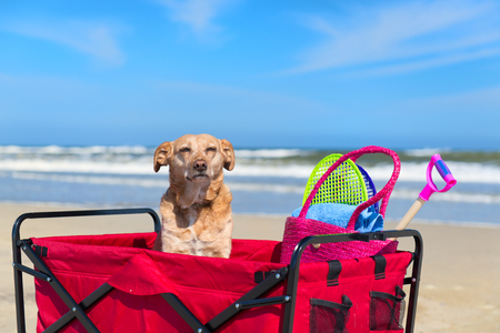 Perro de vacaciones en la playa