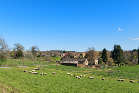 French landscape with village and sheep in the Limousin in France