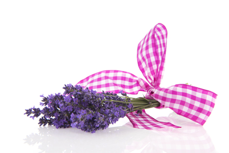 checker: Bouquet Lavender with checkered ribbon isolated over white background Stock Photo