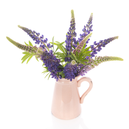 Bouquet purple Lupine in vase isolated over white background