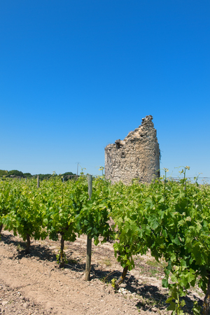 Remain of a tower in French vine yard