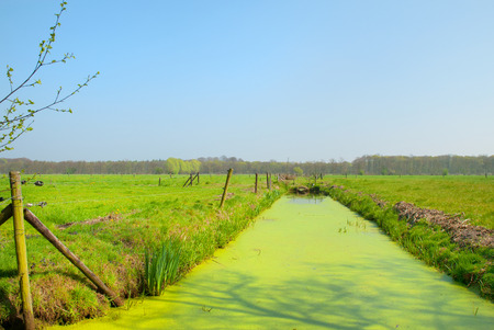 Typical Dutch agriculture landscape with meadows and ditch