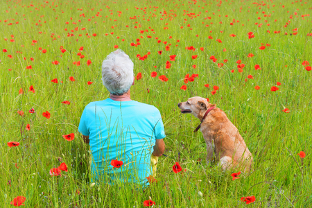 Man and dog sitting in field full with red poppies