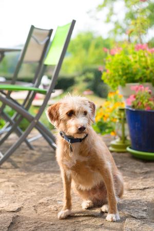 Little cute cross breed dog outdoor in the garden