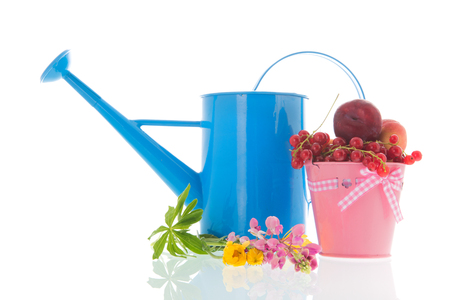 e672b89bf62 Pink bucket full with fresh fruit isolated over white