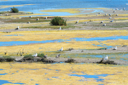 bird sanctuary La Maison du Fier on island Ile de Re