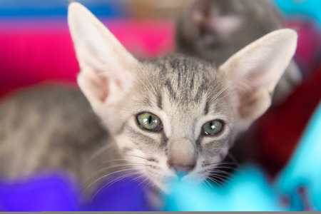 Little birthday kittens in basket with garlands