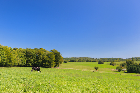 French landscape with black and white cows 写真素材