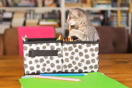 Little tabby cat playing with color pencils in interior