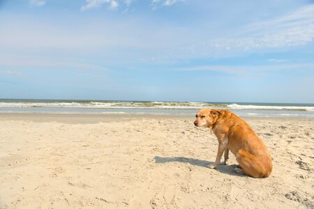 Old brown dog sitting at the beach Stok Fotoğraf
