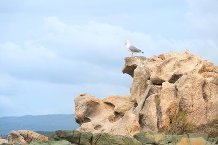 Seagull on the rocks on French island Corsica