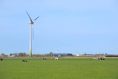 Typical Dutch landscape with cows and wind turbines Stock fotó