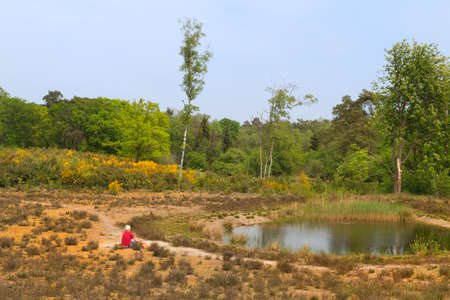 Small lake in nature heather landscape 免版税图像