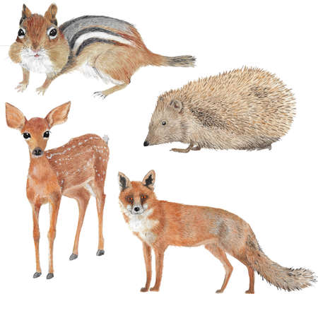 Four different forest animal illustrations in watercolor as fawn, chipmunk, fox and hedgehog Standard-Bild