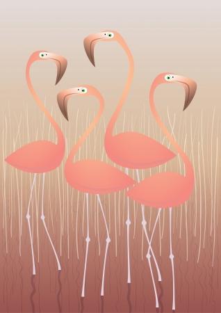 flamingi: Cztery Ilustracja Flamingi