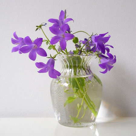 bluebells: Bouquet of bluebells flowers in a glass vase Stock Photo