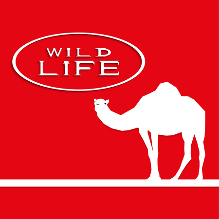 humped: A camel on a red background with the inscription wild life. Vector illustration.