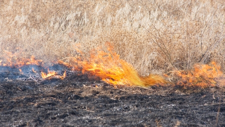 Burning dry yelow field with fire and smoke photo