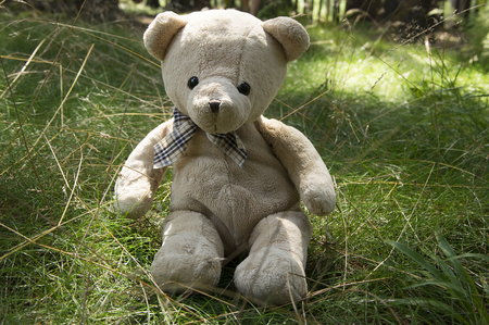 One teddy bear relaxing in the woods, sitting in the grass