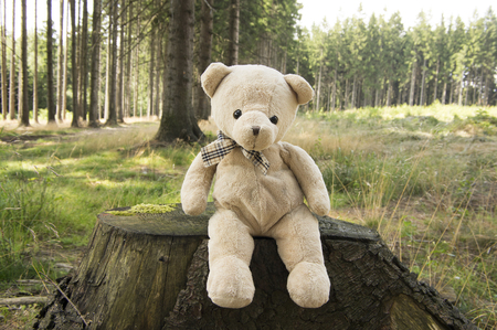 One teddy bear relaxing in the forest, sitting on the stump, sunny day Stock Photo