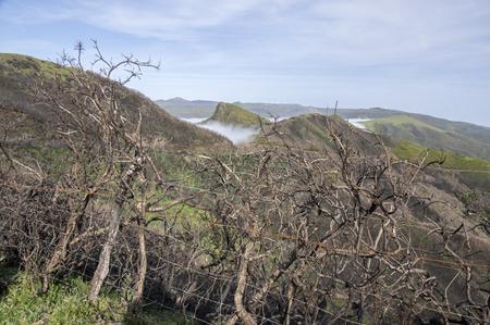 Burned shrubs,cloudiness in the valley, Paul da serra high plain, Madeira, Portugal Foto de archivo