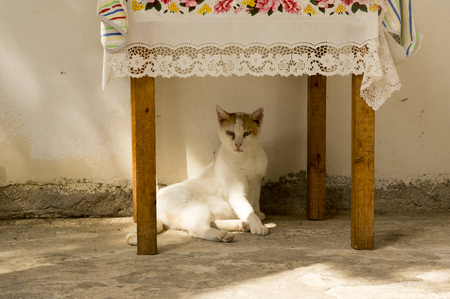 Wild greece street cat lying under the table in sulight, white lazy cat, cute small beast