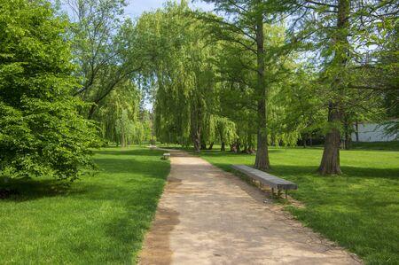 Parc public en été au soleil avec banc en bois, belle allée de saules et chemin de sable, ciel bleu