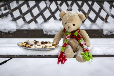 Beige plushy teddy bear with red green striped knitted scarf sitting with Christmas cookies on the bench covered with white snow during winter season