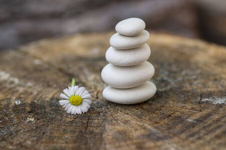 White five stones cairn in daylight, poise light pebbles on wooden stump in front of brown natural background, zen like sculpture, simplicity, harmony and balance, flowering daisy flower 写真素材