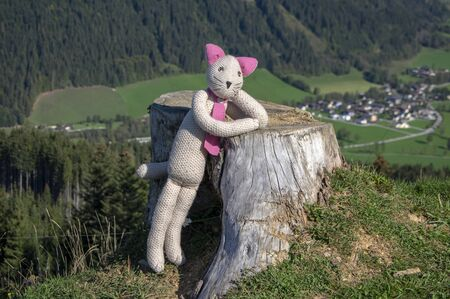 Plushy cat enjoying great autumnal weather in the mountains, being on the top of the mountain with austrian Werfenweng town on background in the valley