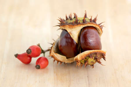 Group of fresh autumnal chestnuts on wooden table, spiny nuts isolated from brown background in daylight Standard-Bild