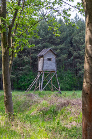 Wooden deer stand looks like elevated tiny house with ladder situated on small glade in the middle of forest, blue sky and sunny