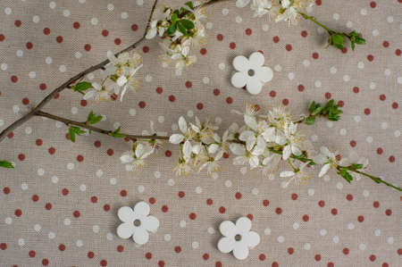 Easter springtime background on dotted tablecloth decorated with blackthorn sloe branch and white wooden flowers, green leaves, Standard-Bild