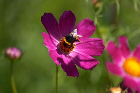stamen wasp: